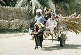 Donkeys continue to play a central role, both in transport of agricultural and other goods as well as taxis.