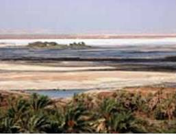 Siwa is partly surrounded by vast saline lakes, and maintaining their gardens saline-free requires considerable skill, cooperation and manpower.