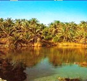 Siwa's artesian wells are the source of irrigation water for the intensive cultivation of dates, olives and vegetables.