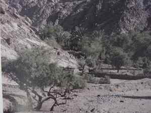 Tamarisk Trees.  Walter Reinhold