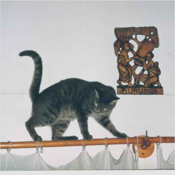 Being 25% East African Wild Cat, Lulu's favorite haunts were up on curtain rods, etc.