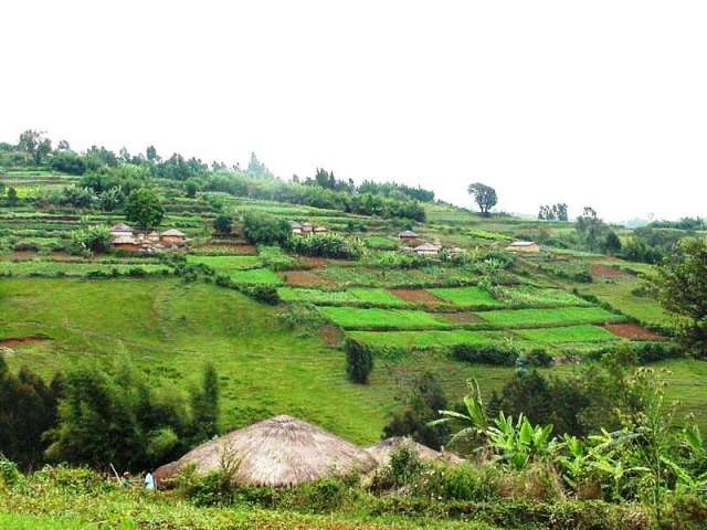 A series of rugo organized along a hill.   Not all of Burundi is this picturesque; this is in Mugamba Provence, south-west Burundi, where some of the finest of traditional rugo constructions are still maintained.