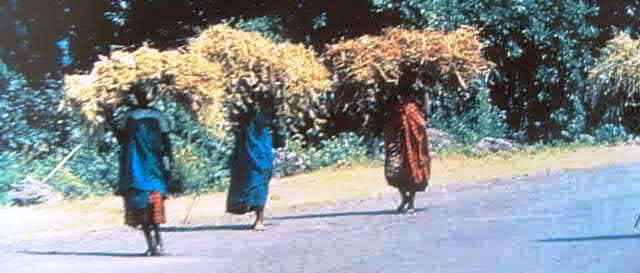 Women transporting dried beans