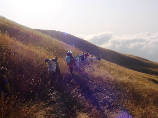 The grasslands of Mount Cameroon.  Source:  cabose.org.uk