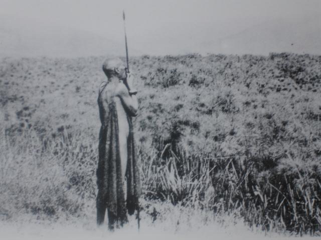 Papyrus and lotus swamp in Burundi, c. 1910