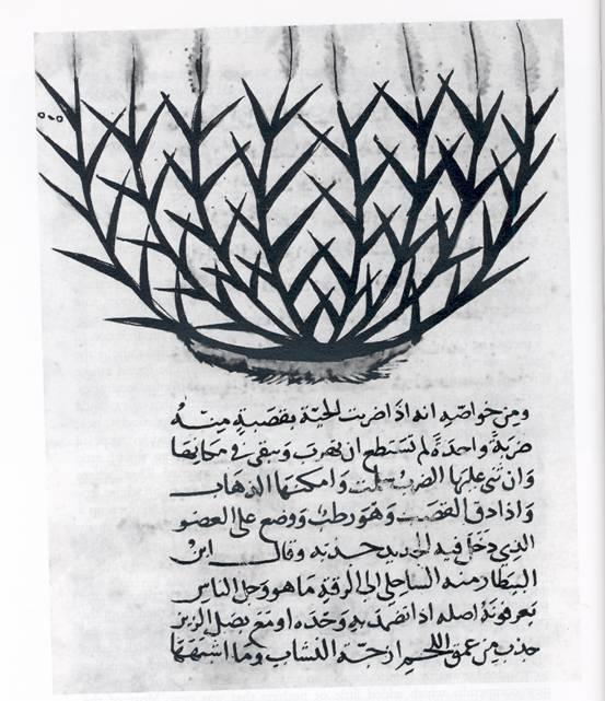 Image result for arab sugarcane archaeology