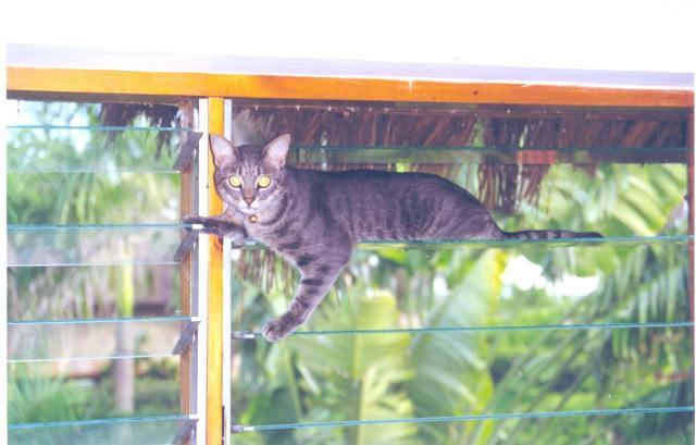'Wildcat' pose