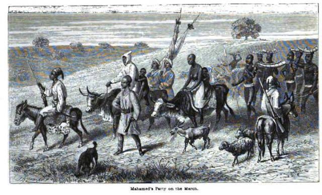Caravan with slaves carrying ivory, moving towards the Somali coast.  Source:  Speke, What Led to the Discovery of the Nile