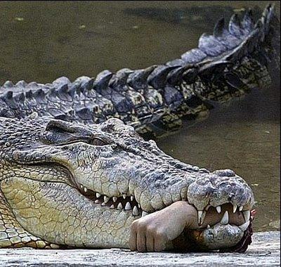 Croc Movies Sex 4