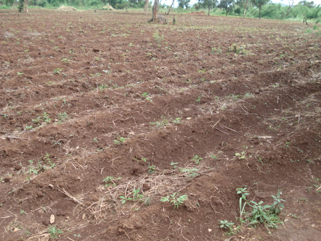 Mixed Cropping: A Successful Organic Strategy for Small Farmers (3/6)