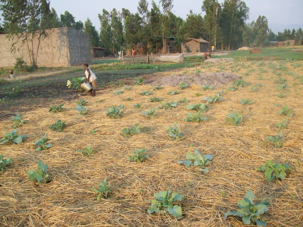 Mixed Cropping: A Successful Organic Strategy for Small Farmers (6/6)