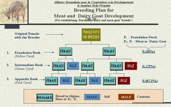 Starting Goat Farming Business Plan (PDF)