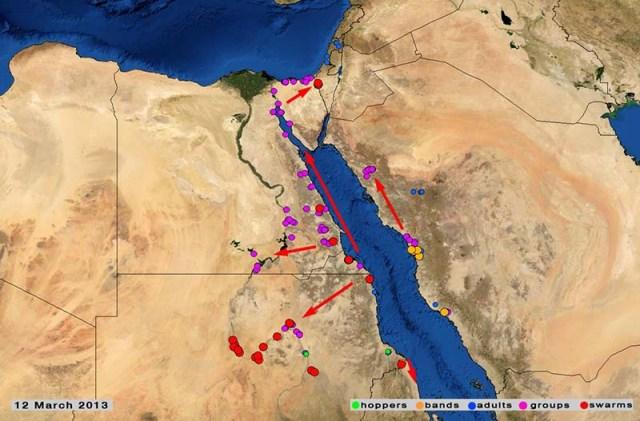 Source: FAO-Desert Locust briefs