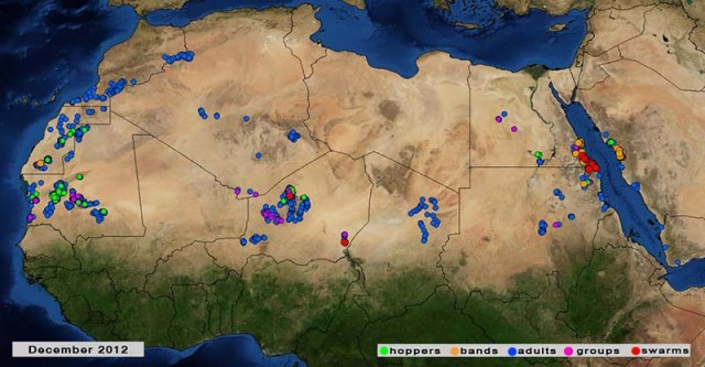 4 Jan. 2012, swarms-bands persist on red sea coast.  Source: FAO