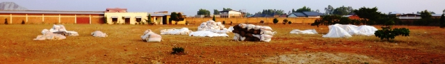 As soon as rain threatens, rice is quickly bundled up in large sacks that are covered with tarps.