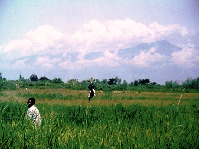 Tending rice during a normal wet season; mountains of the Congo can be seen to the right.  I took this period before all of the construction took place in the Imbo.