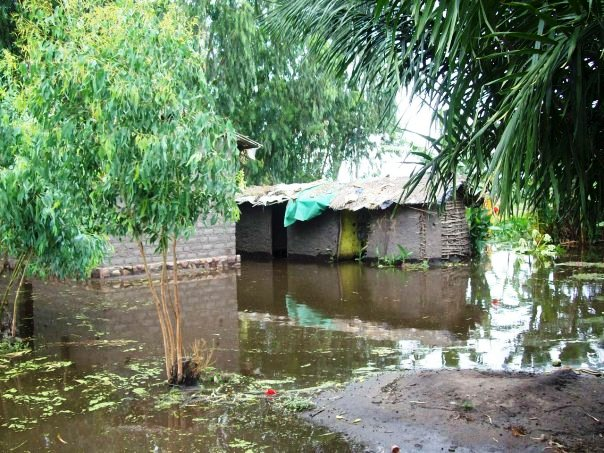 With the ongoing rains the past month, not only have both the unharvested and harvested rice been severely damaged, but also houses in the village - many of which, being made of mud brick, collapse.  I took this picture a few years ago, during a similar overly-heavy rainy season.
