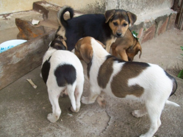 Maxi as a pup, with his brothers and sisters.