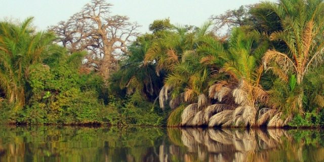 Along the banks of the Gambia River.  Source: hilarysplaces.com