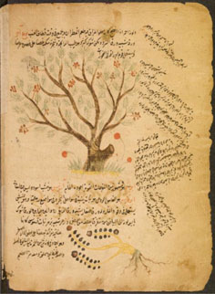 Arabic botanical treatise, unknown author (c) Princeton Univ. library.