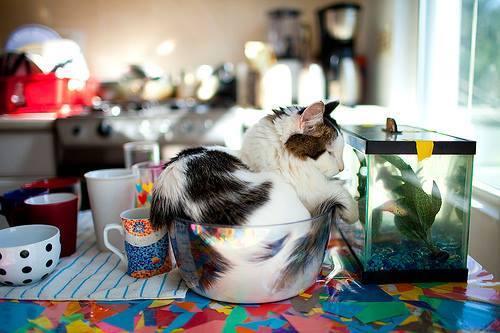 Kattenmutsen