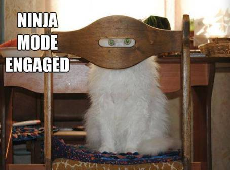 Ninja cat.  h-t Jerry