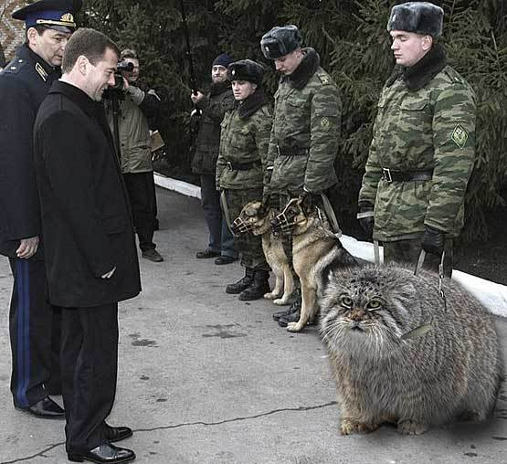 Photoshopped, perhaps.  Source - pallas-cat-shopped-8150