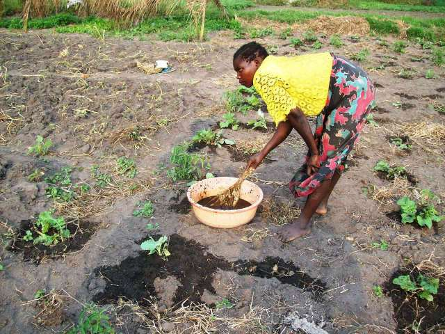 In our gardens, women fertilize plants with a goat dung slurry; some may also beseach a kindly spirit to help her gain a good harvest.  Source - dianabuja