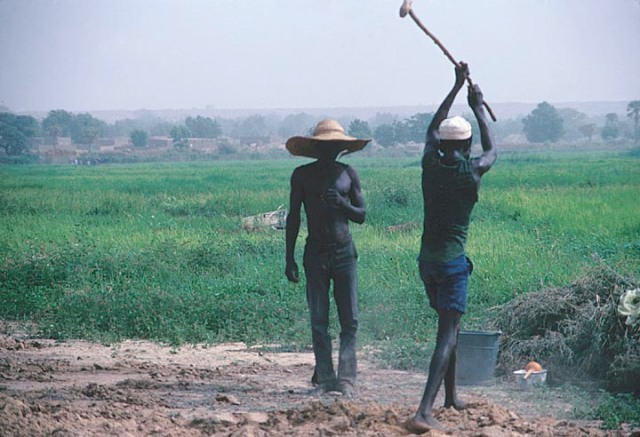 Rice Farmers,Niger River Near Niamey search.library.wisc.edu