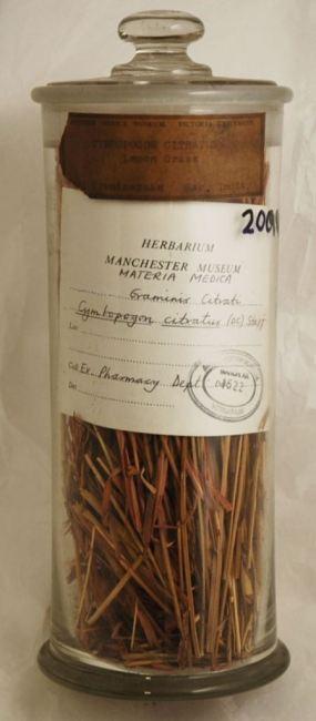 Materia Medica jar containing Cymbopogon citratus